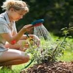 Tips to maintain your garden