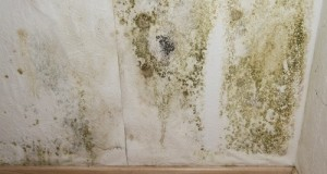 Important factors for mold remediation before spending too much
