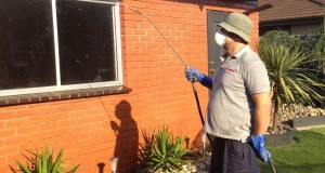 Remove all types of pest from your house by the help of pest controllers St Albans