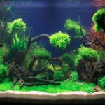 How the colours you choose for your aquarium can affect your mood