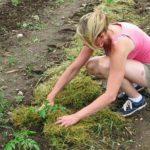 Overwintering Tender Plants: Lifting or Mulching