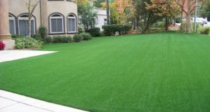 I Purchased Synthetic Grass For Sale And Here's What I Got